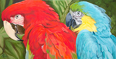 Macaws, Interrupted